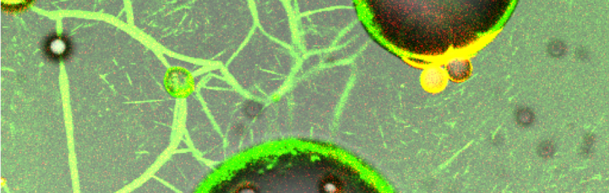 Biological Emulsions